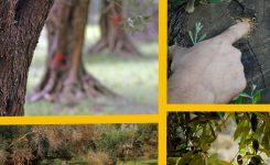 La tutela del patrimonio naturale dalla xylella ed altri batteri